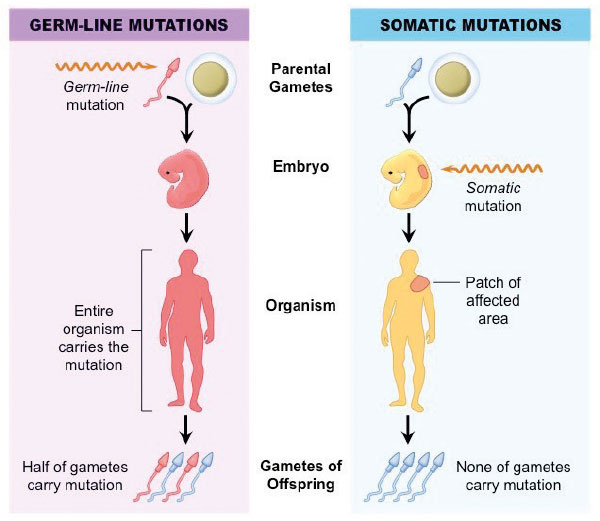 Figure 2) A new mutation