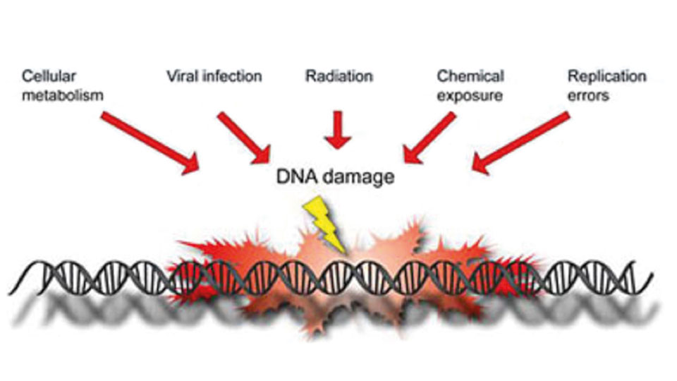 Causes of DNA Mutations